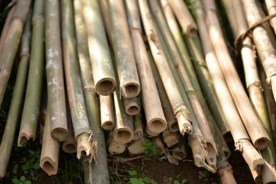 Bamboo Bamboo Fence Bamboo Shoots Bamboo Spear Circle Close-up Day Eyeem Philippines Large Group Of Objects No People Outdoors Spear Spears