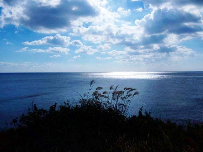 JEJU ISLAND  Sea Sea View Sea And Sky Silvergrass Blue South Korea