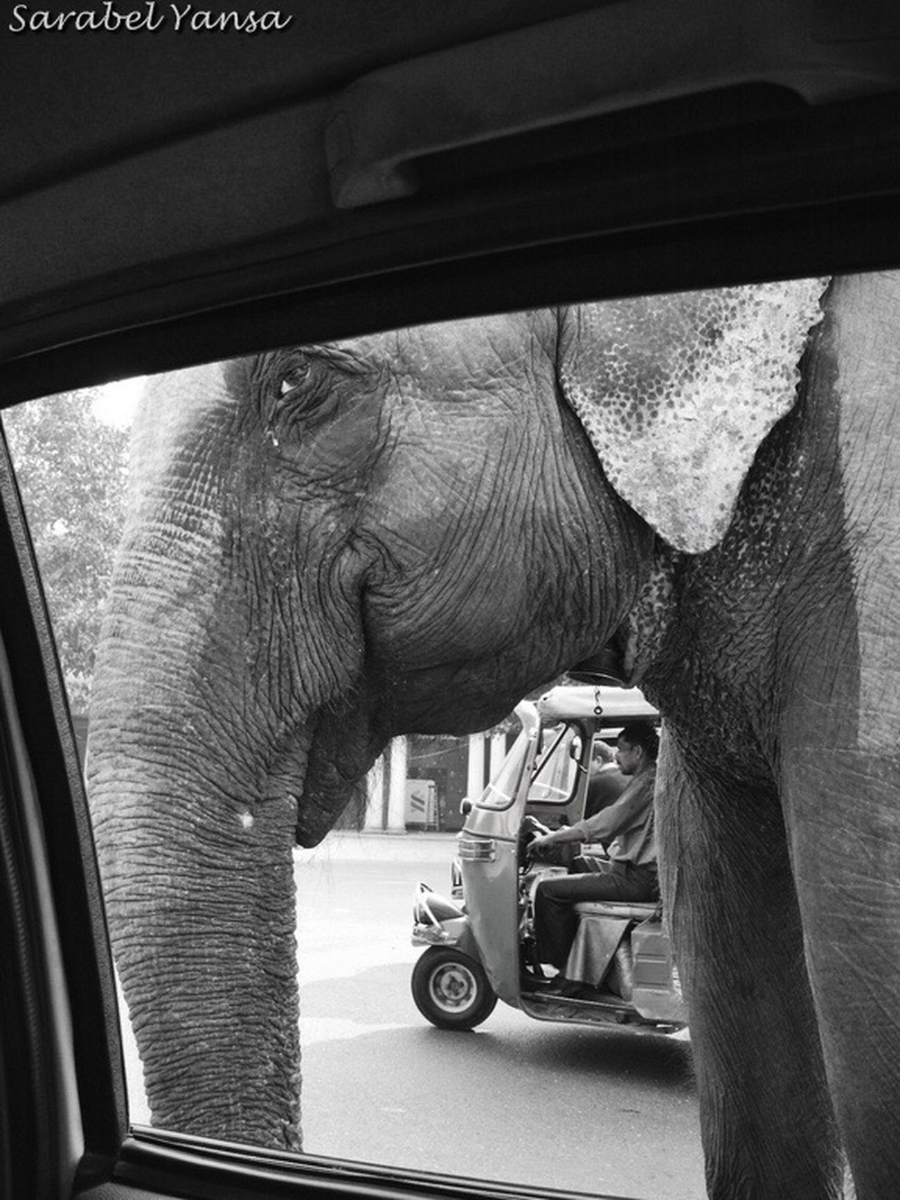 "PerDiemTributeProject Worldwildlifeday Diamundialdelafaunasalvaje Blackandwhite Photography Bnw_captures Elephant India Eye4photography  EyeEmBestPics WORLD WILDLIFE DAY. ""If we kill off the wild, then we are killing a part of our souls"" Jane Goodall DIA MUNDIAL DE LA FAUNA SALVAJE. ""Si matamos la fauna salvaje, entonces también estamos matando una parte de nuestras almas"" Jane Goodall"
