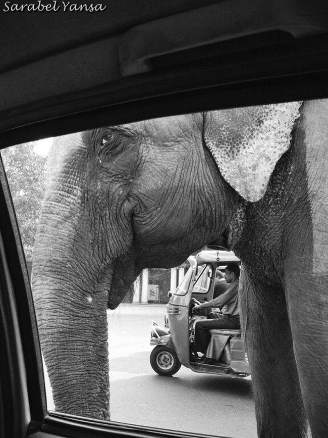 "PerDiemTributeProject Worldwildlifeday Diamundialdelafaunasalvaje Blackandwhite Photography Bnw_captures Elephant India Eye4photography  EyeEmBestPics WORLD WILDLIFE DAY. ""If we kill off the wild, then we are killing a part of our souls"" Jane Goodall DIA MUNDIAL DE LA FAUNA SALVAJE. ""Si matamos la fauna salvaje, entonces también estamos matando una parte de nuestras almas"" Jane Goodall"