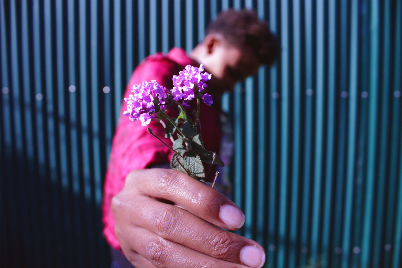 Close-Up Of Man Holding Purple Flowers
