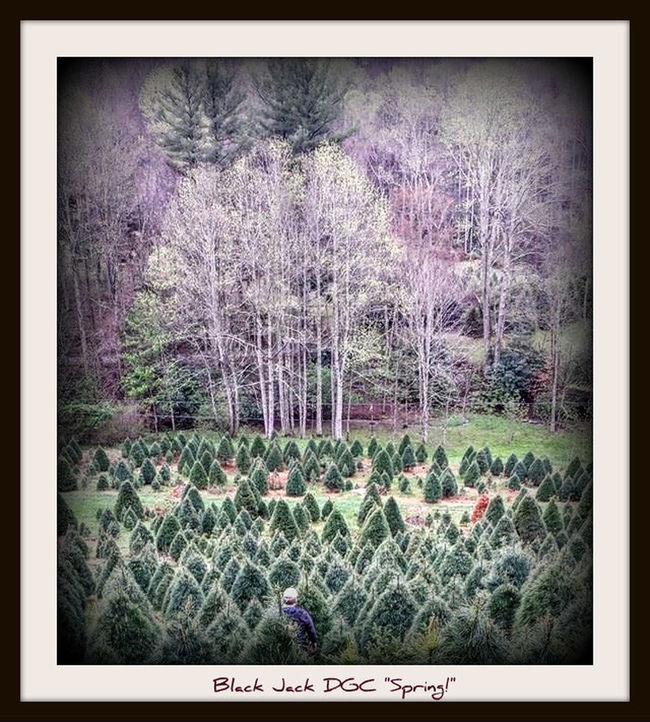 Discgolf Discgolfholes Mountains Christmas Tree Farm Spring Colours