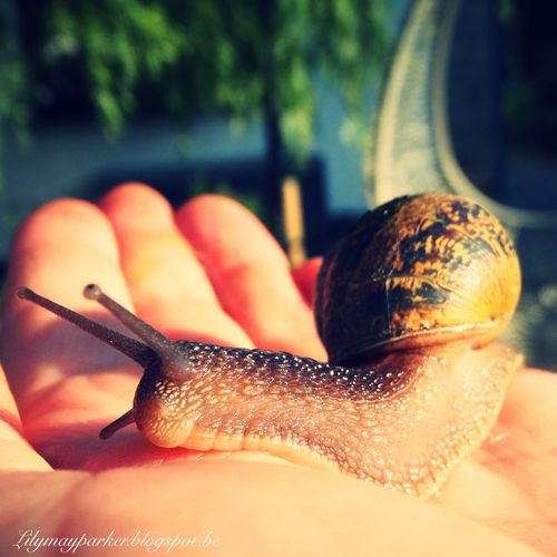 Snail Check This Out Lily Style Lily May Art Earn My Memory  Lily May Collection Belgium Lilymayparker.blogspot.be Lily @rt Behind The Scene From My Point Of View Lily May Parker EyeEm Gallery Nature Photography Eyem Nature Lover Eyeem Gallery. Behind The Lens Beautiful