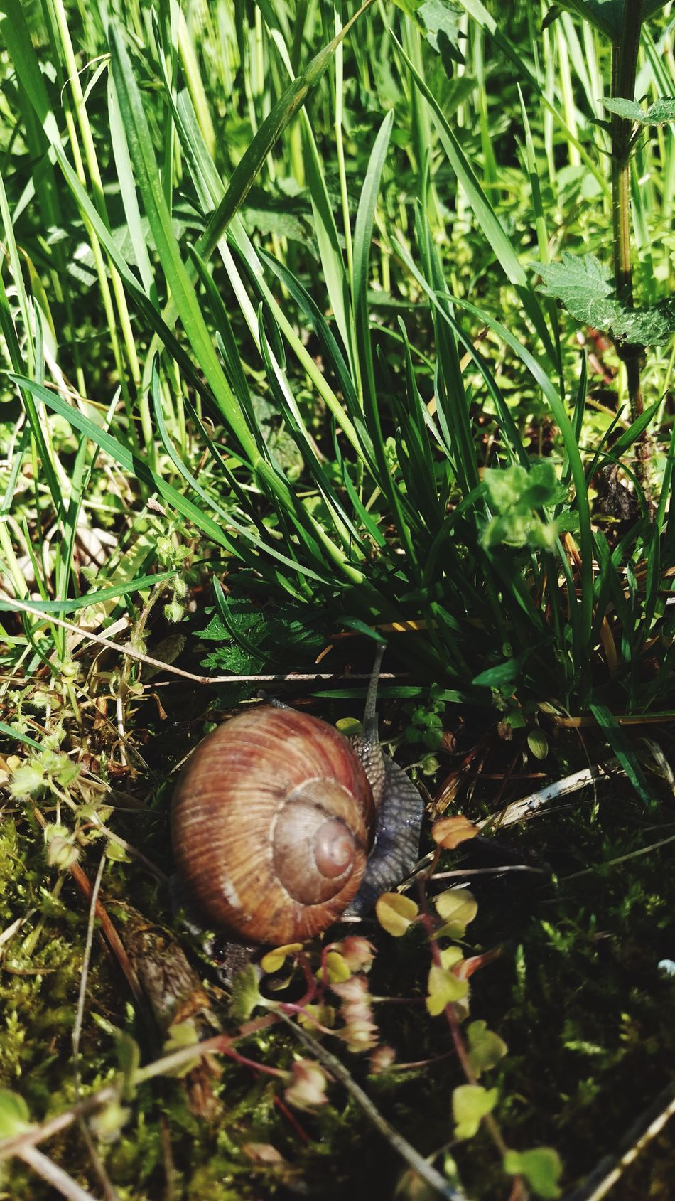 Even slow progress is progress Nature Animals