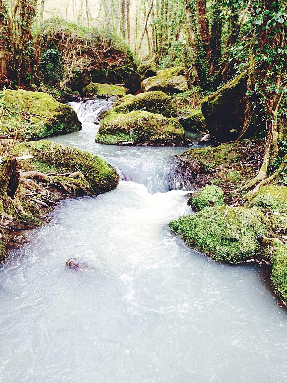 Nature Freschetto🍂🍁 Iniziatalaprimavera Muschio Ruscello  Relax Silenzio ☀️🍄🍂🌿🍃🌰