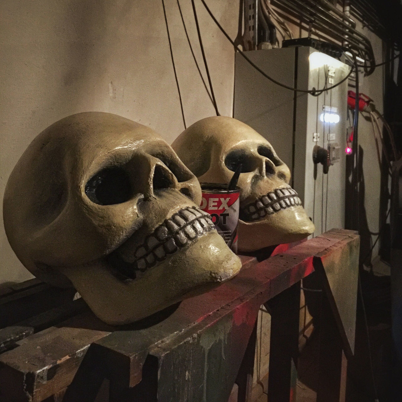 human skull, human skeleton, skull, spooky, indoors, bone, skeleton, close-up, day