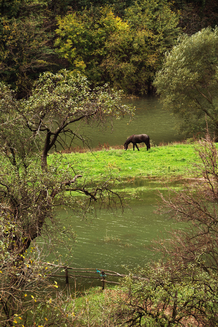 one animal, animals in the wild, tree, animal wildlife, nature, animal themes, outdoors, no people, mammal, day, forest, full length, landscape, scenics, grass, water, beauty in nature