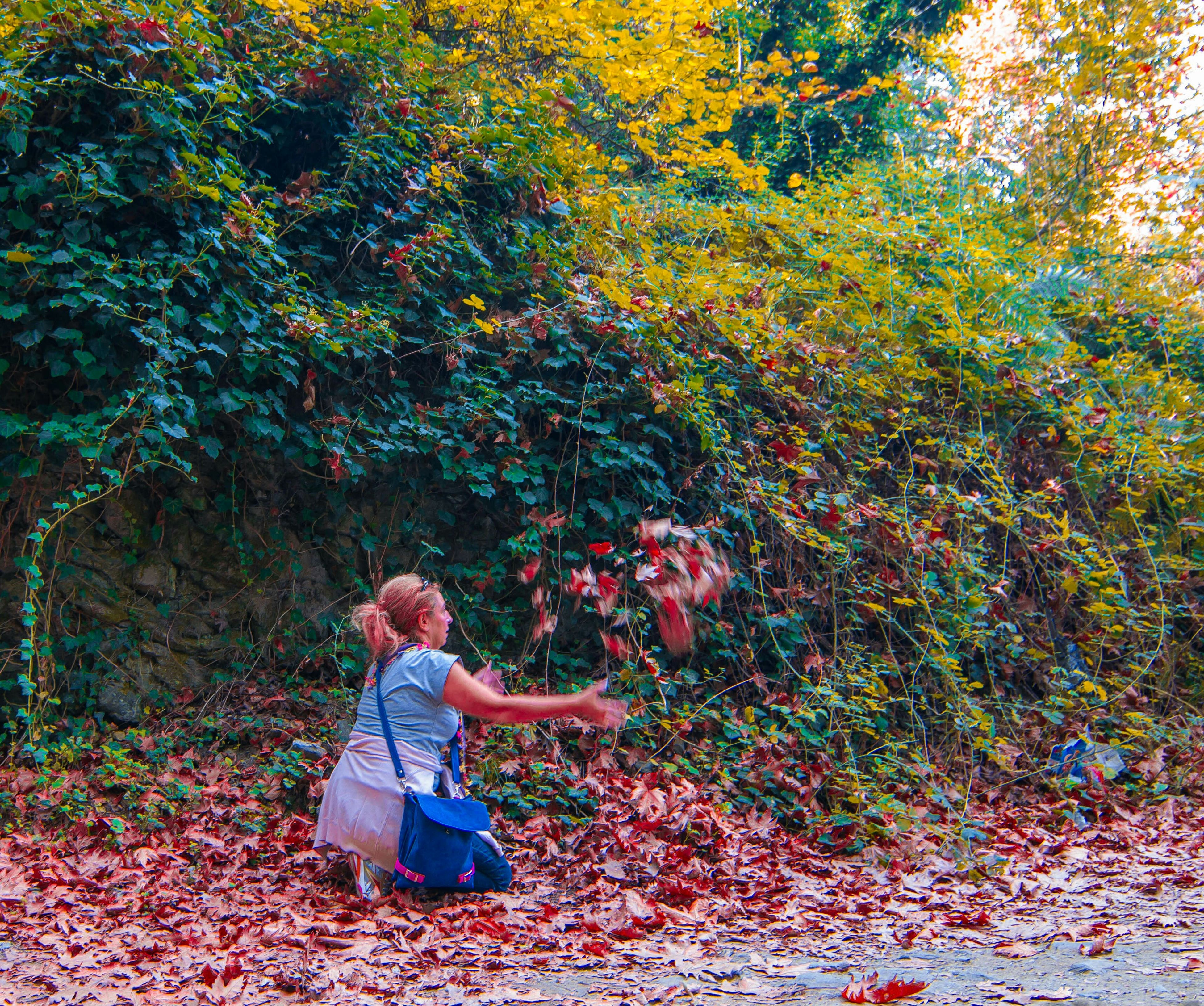 autumn, leaf, change, growth, tree, nature, plant, season, fallen, tranquility, park - man made space, beauty in nature, flower, day, orange color, outdoors, red, yellow, field, branch