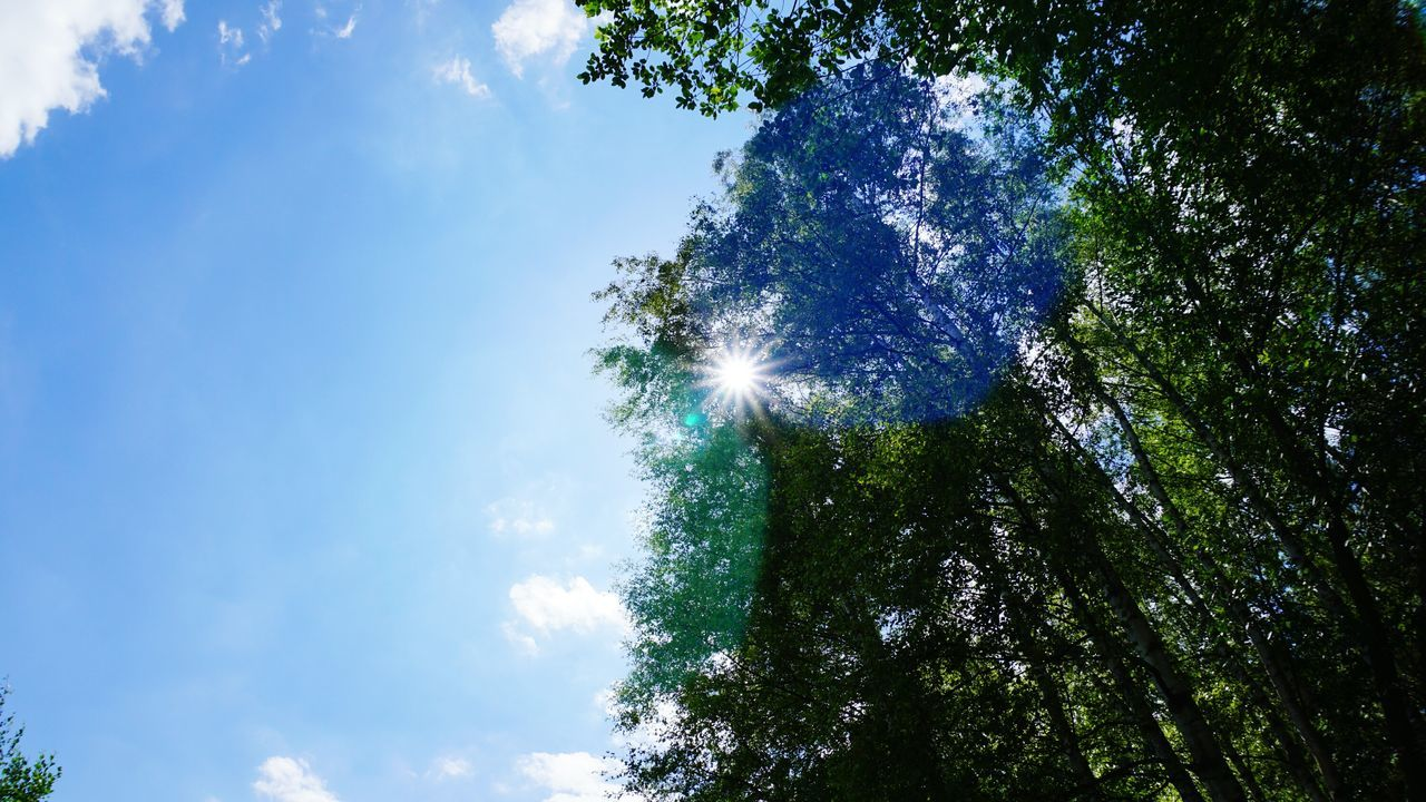 low angle view, tree, nature, beauty in nature, sky, lens flare, sunbeam, sunlight, no people, blue, sun, day, tranquility, outdoors, growth, green color, scenics, branch