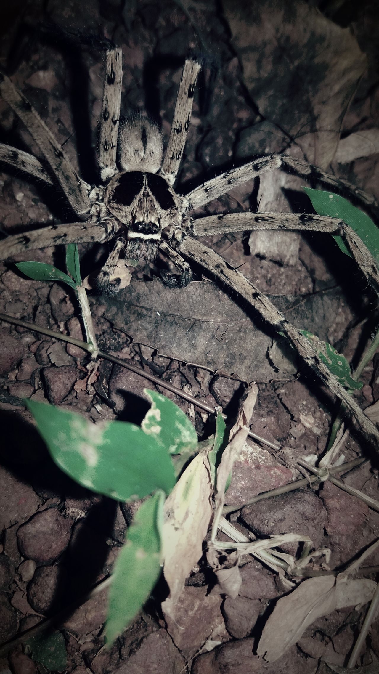 Mobile Photography spider 🕷 No People Outdoors Spiderman Spiderworld Spider Eyes Spider Nature_collection Eyenaturelover Rare Photography