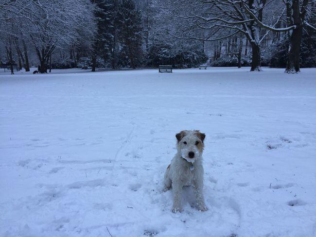 Snow Cutestterrieralive Twilight