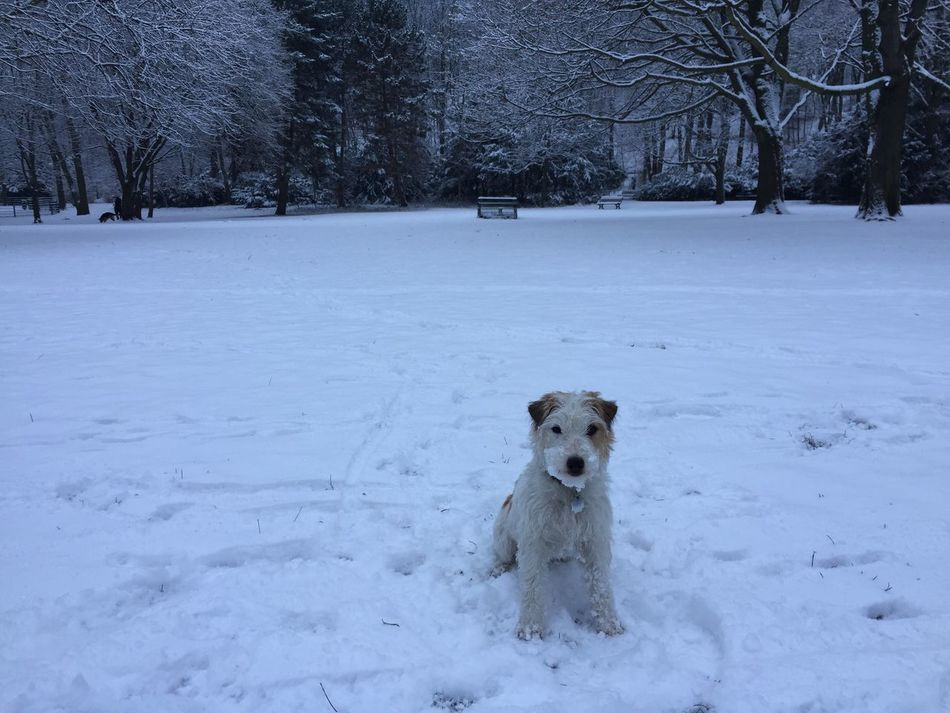 Snow Cutestterrieralive Twilight