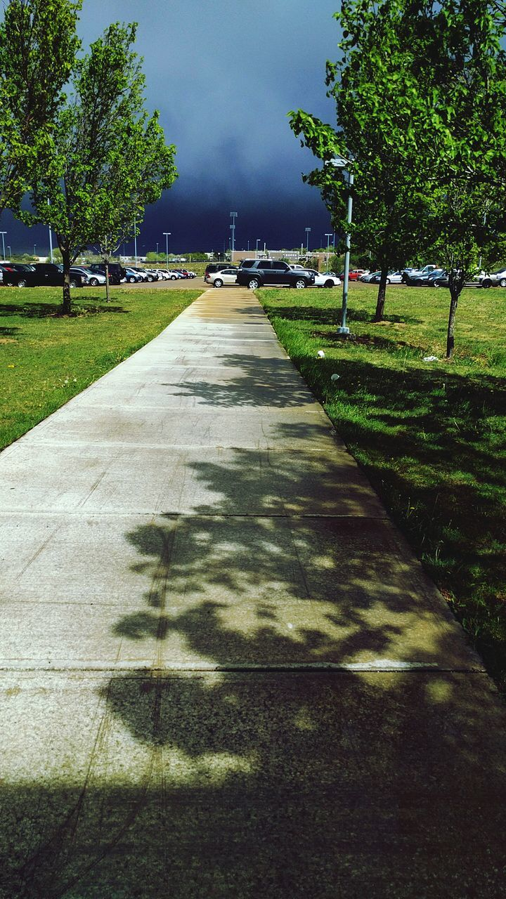 tree, shadow, sunlight, outdoors, day, nature, grass, no people, growth, sky, beauty in nature
