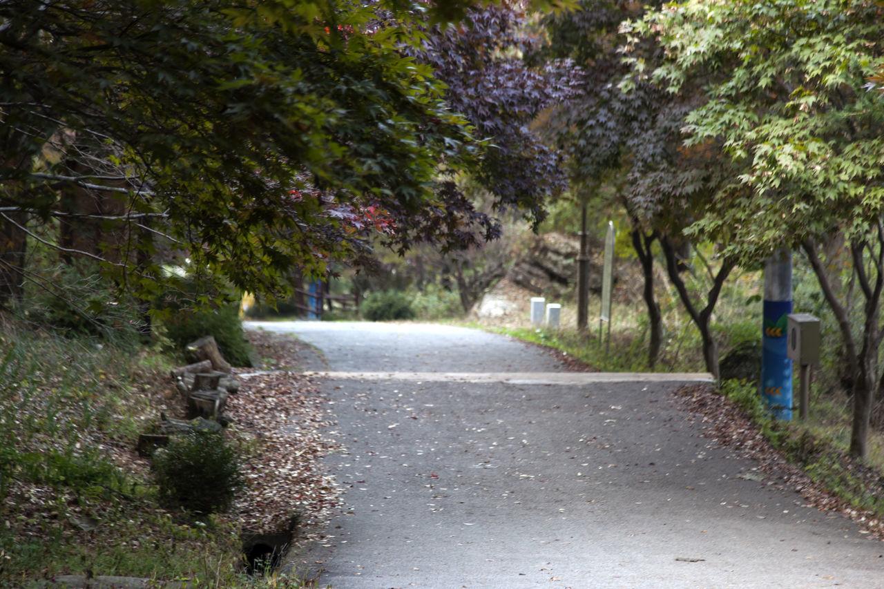 autumn in Maisan Mountain, Muan, Jeonbuk, South Korea Autumn Day Fall Forest Lane Maisan Nature No People Outdoors Plant Road Tranquility Tree Walkway