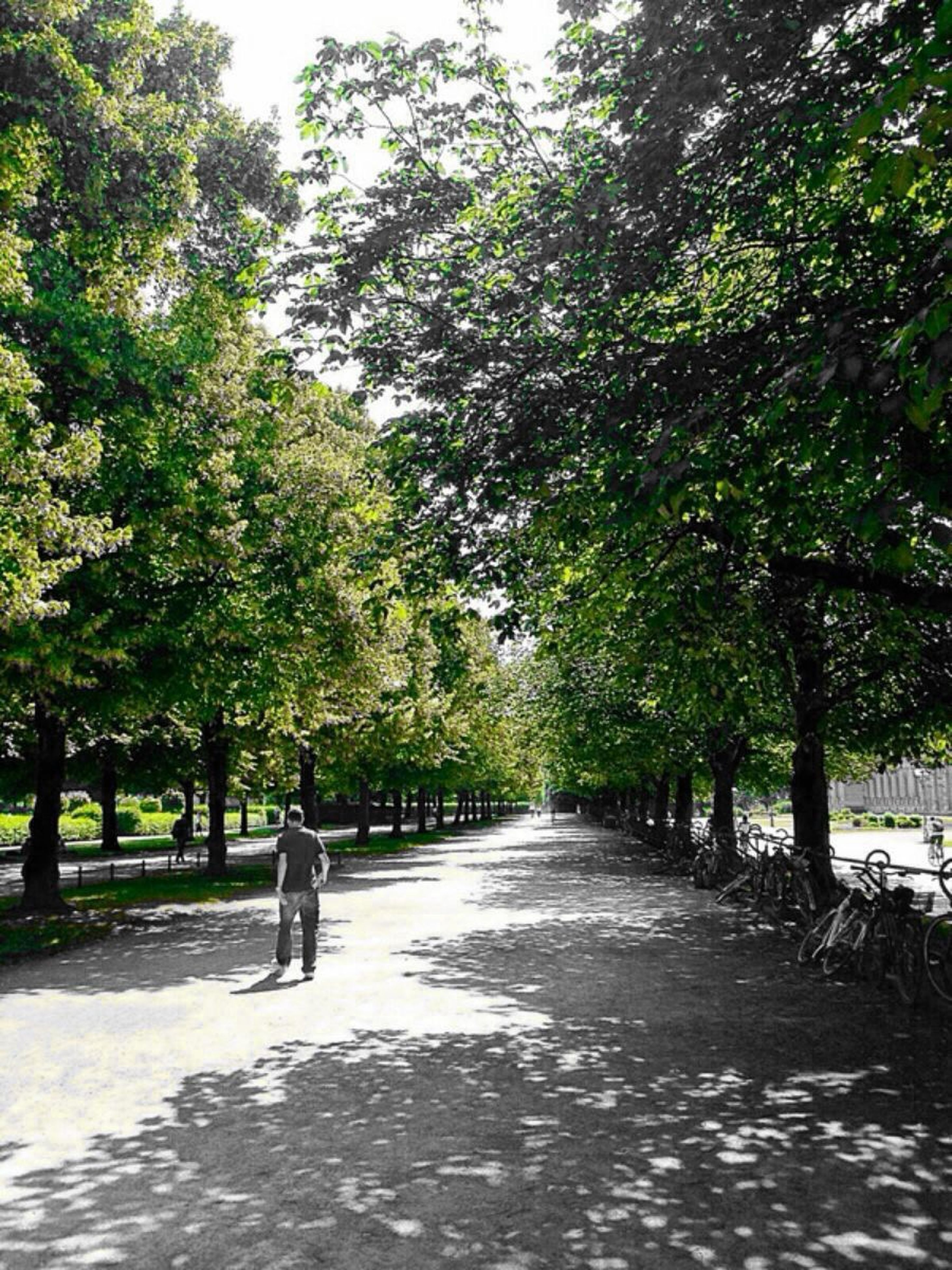 tree, the way forward, treelined, diminishing perspective, tranquility, growth, vanishing point, nature, road, tranquil scene, footpath, beauty in nature, transportation, branch, green color, sunlight, scenics, day, shadow, street