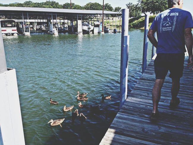 Hungry ducks. Summertime Stopping Time Lake Life Lake Texoma