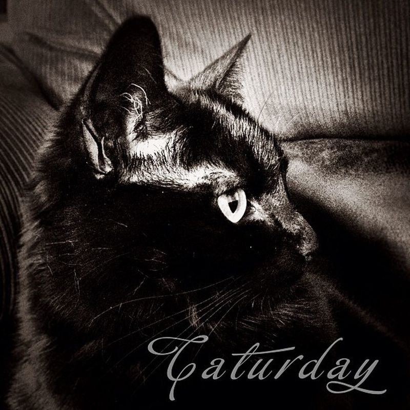 Caturday Crazycatlady Crazycatwoman K8marieuk Photo365 Catsofig Catsofinstagram Catlovers Petsofig Petsofinstagram Petlovers Cats Cat BLackCat Witchescat Lucky Luckyblackcat Cameraplus Title