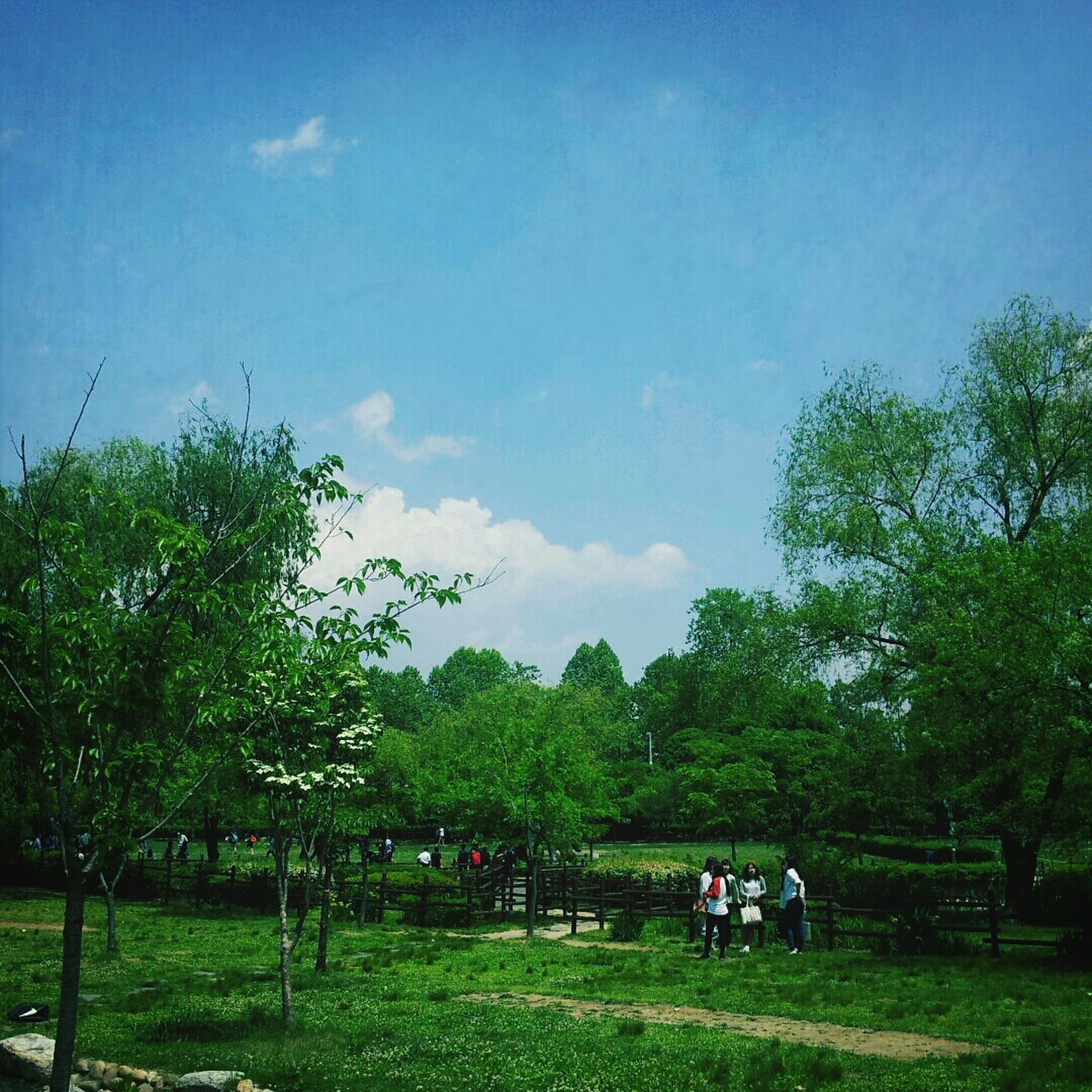 tree, grass, green color, sky, field, grassy, growth, men, park - man made space, landscape, nature, leisure activity, lifestyles, tranquility, person, cloud - sky, tranquil scene, land vehicle, beauty in nature