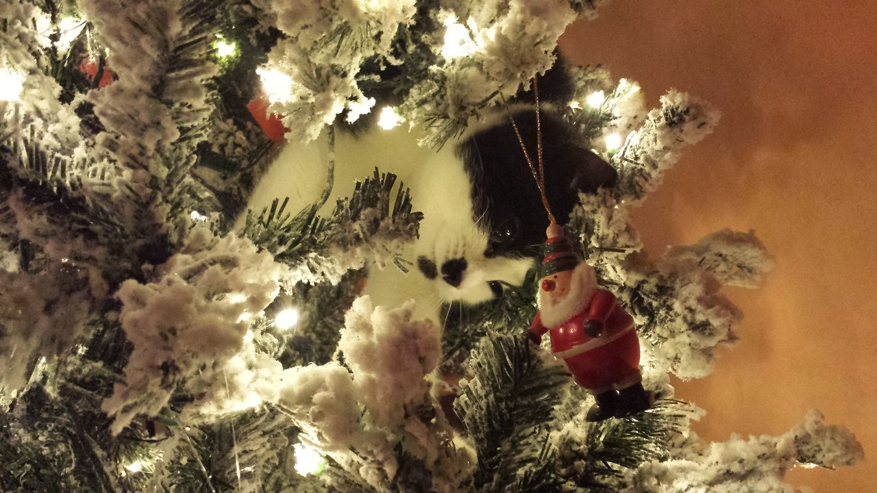 kitten in Christmas tree, playing with the decorations Indoors  Illuminated Tradition Christmas Ornament Christmas Tree Celebration Event Kitten Kitten In Tree Cat Domestic Cat Pets One Animal Christmas Is Coming No People Animal The Holidays Are Coming The Culture Of The Holidays