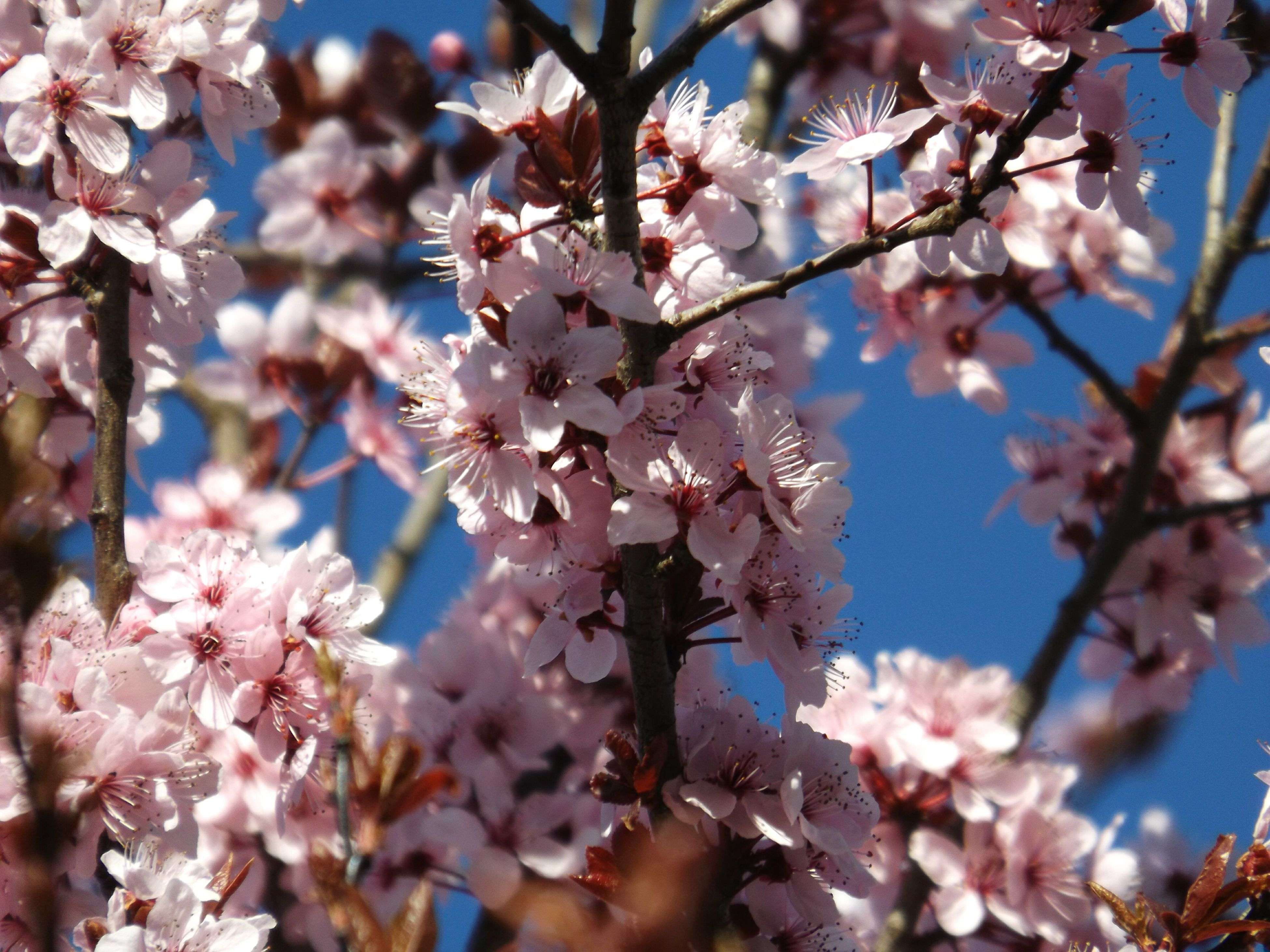 growth, nature, beauty in nature, flower, tree, fragility, springtime, blossom, branch, freshness, no people, sunlight, close-up, petal, outdoors, day, flower head, sky, plum blossom