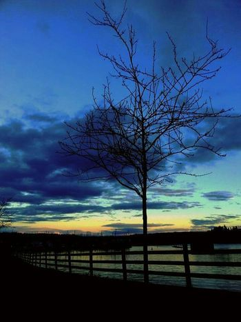Epic Shot Photography Sky And Trees Trees_collection For The Love Of Trees ~ TreePorn Sunset #sun #clouds #skylovers #sky #nature #beautifulinnature #naturalbeauty #photography #landscape Sun_collection, Sky_collection, Cloudporn, Skyporn Natgeo Northwestsunsets EyeEm Best Shots - Trees