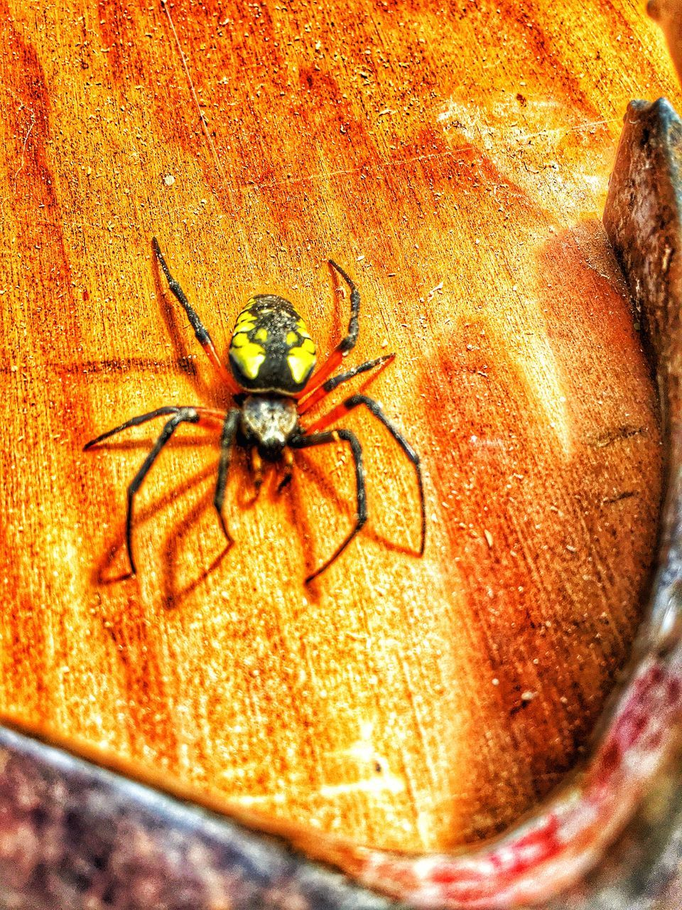 spider, one animal, animal themes, animals in the wild, animal wildlife, no people, close-up, outdoors, day, nature