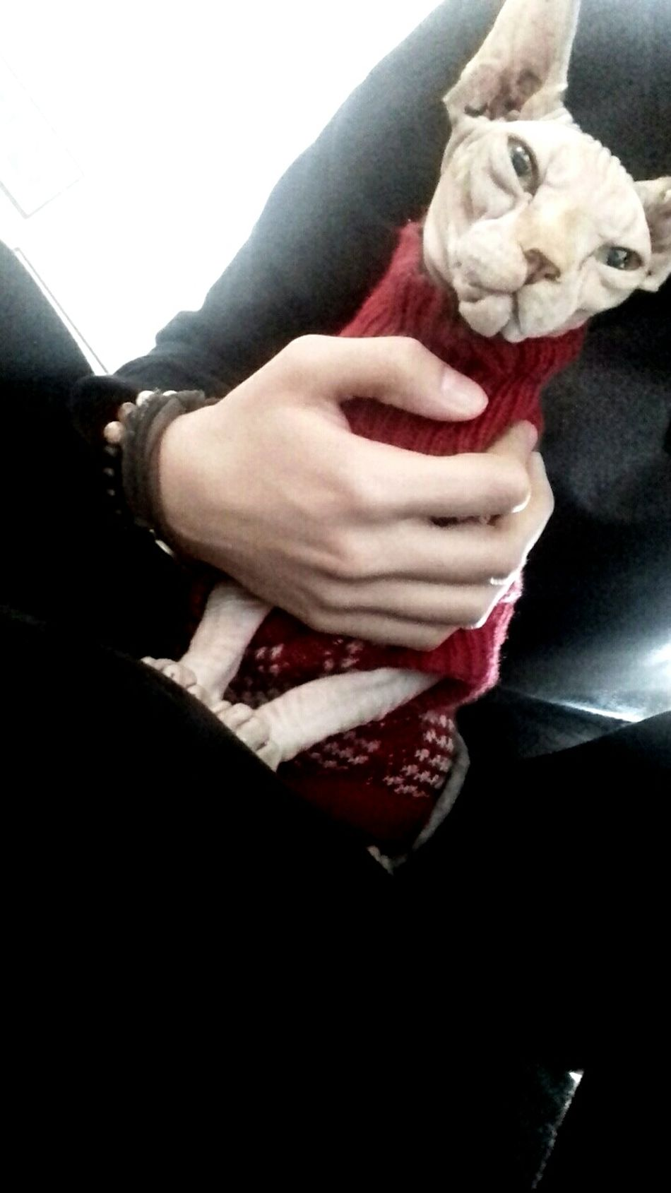 Human Hand Cat♡ My Cat Ily❤ Catoftheday Cat Lovers Catlover Catstagram Cat Cat Photography Cats Of EyeEm Takenbyme😛👌