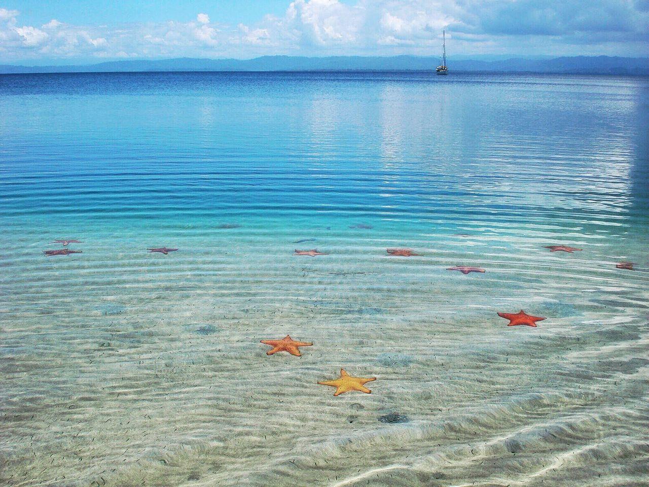 EyeEmNewHere Sea Caribbean Sea Stars Water Stars