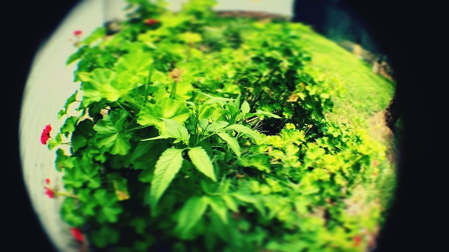 Nature Photography Green Color Leaf Fisheye Collection Photography Themes Colour Vscocam Vsco Cordoba-argentina Outdoors Air Composite Image Motog4 Art Cymera Beauty In Nature Backgrounds