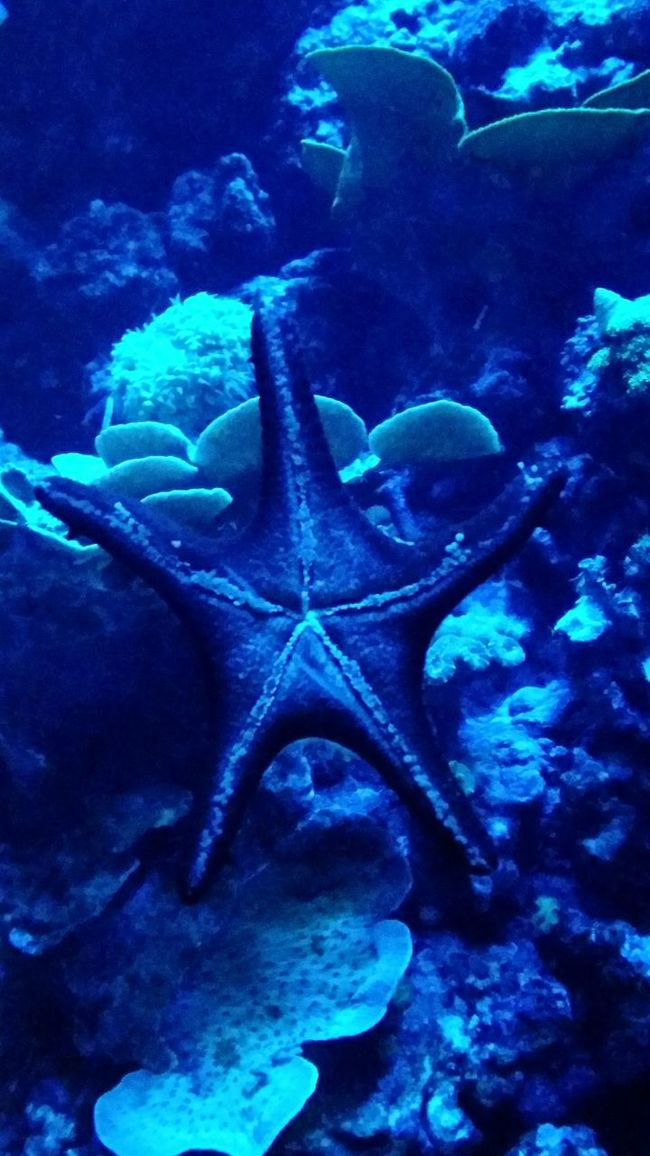 TakeoverContrast Close-up Animal Themes Underwater Blue UnderSea The Past Full Frame Sea Focus On Foreground Ancient Estrela Do Mar Aquarium Taking Photos Dramatic Angles Oceanariodelisboa Oceanário De Lisboa Oceanário Star Fish Oceanarium Nature Fragility Rock Formation