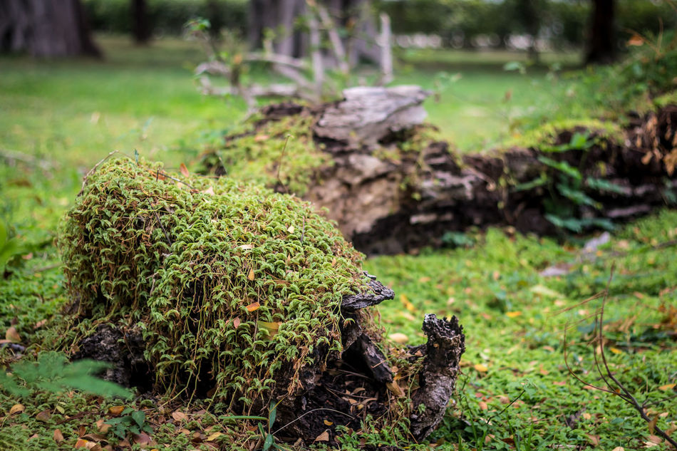 Fallen Tree Close-up Day EyeEm EyeEm Gallery EyeEm Nature Lover EyeEmNewHere Field Focus On Foreground Grass Green Color Growth Nature No People Outdoors Quinta De San Pedro Alejandrino Ibamenphoto