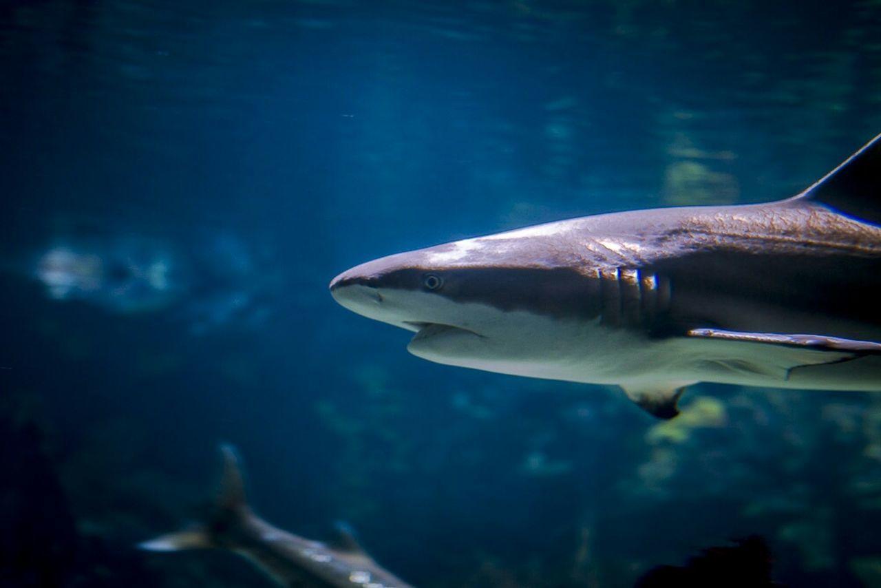 Cobalt Blue By Motorola Berlin Aquarium Berlin Shark Bluelight Underwaterphotography Canon 70d Taking Photos Check This Out Hello World