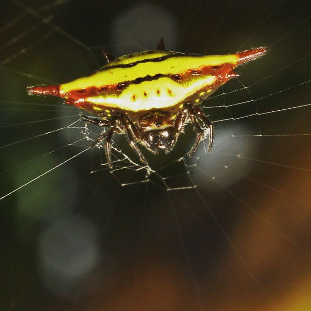 Diagonal spider part 2. Spider Spiderworld Ig_spiders Ig_spider