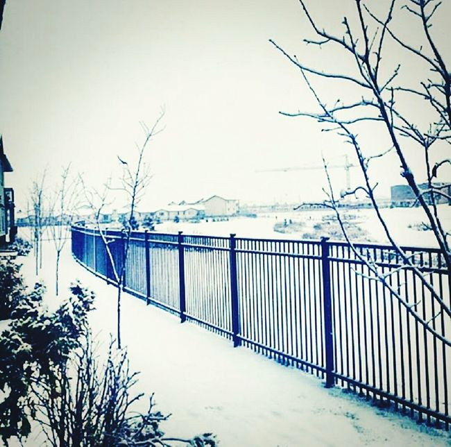 Throwback to Winters. Snow ❄ Snow Day Snow❄⛄ Snowlife Letitsnowletitsnowletitsnow Snowlove Snowtree Snowtography Sowhite