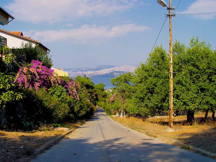 Flowers Beauty In Nature Buganville Clouds Day Downhill Road Flower Growth Nature Outdoors Purple Flower Rod Scenics Sea Sky The Way Forward Tranquility