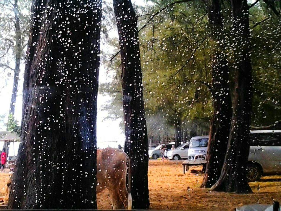 INDONESIA Rain Drops