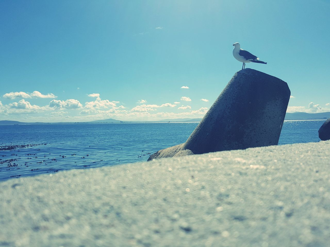 sea, water, bird, animals in the wild, one animal, animal themes, nature, day, perching, animal wildlife, outdoors, no people, sky, beauty in nature, seagull, horizon over water, beach, retaining wall