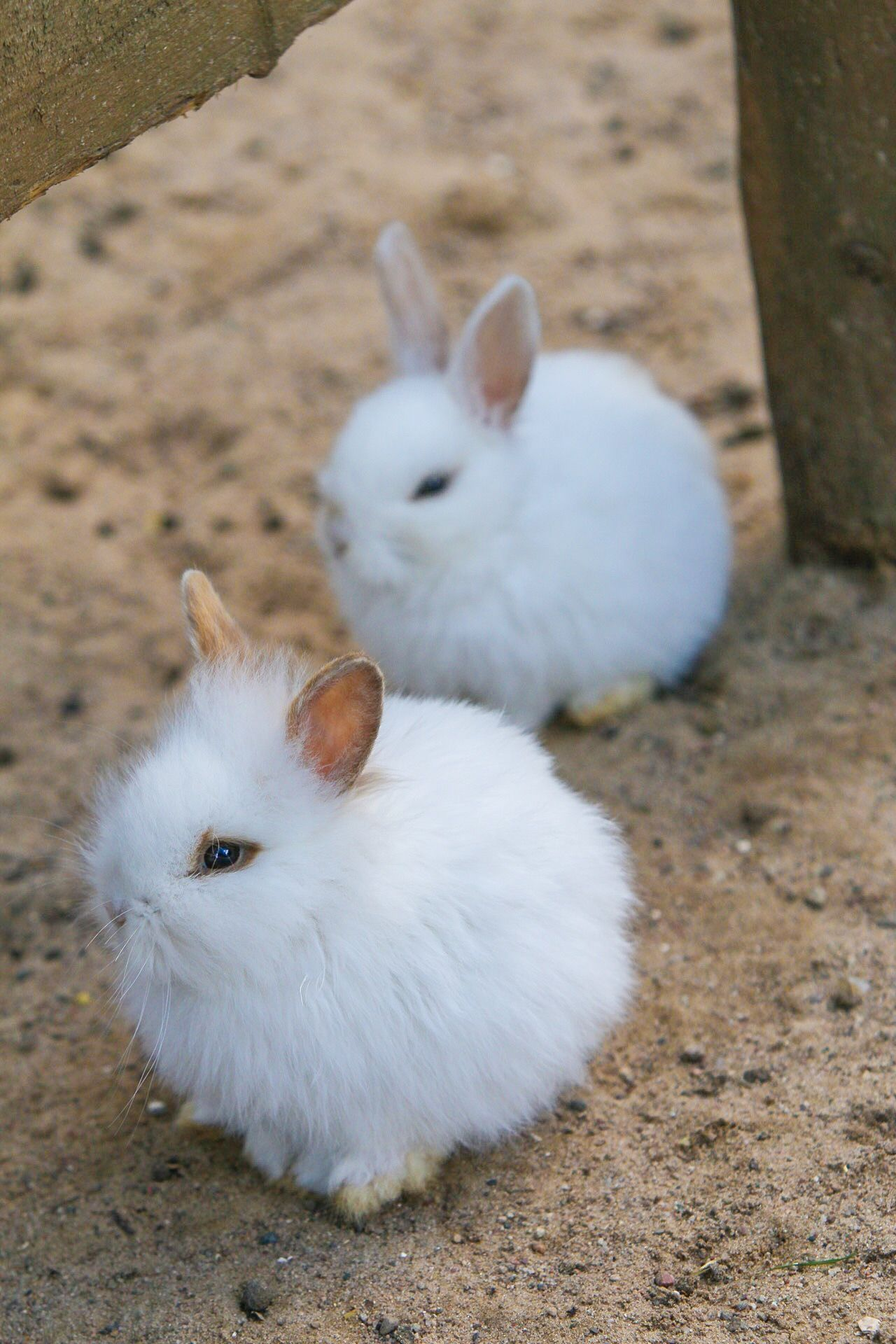 Rabbit Rabbits Rabbits 🐇 Animal Love Animal_collection Animal Photography Cute Pets Cute Animals
