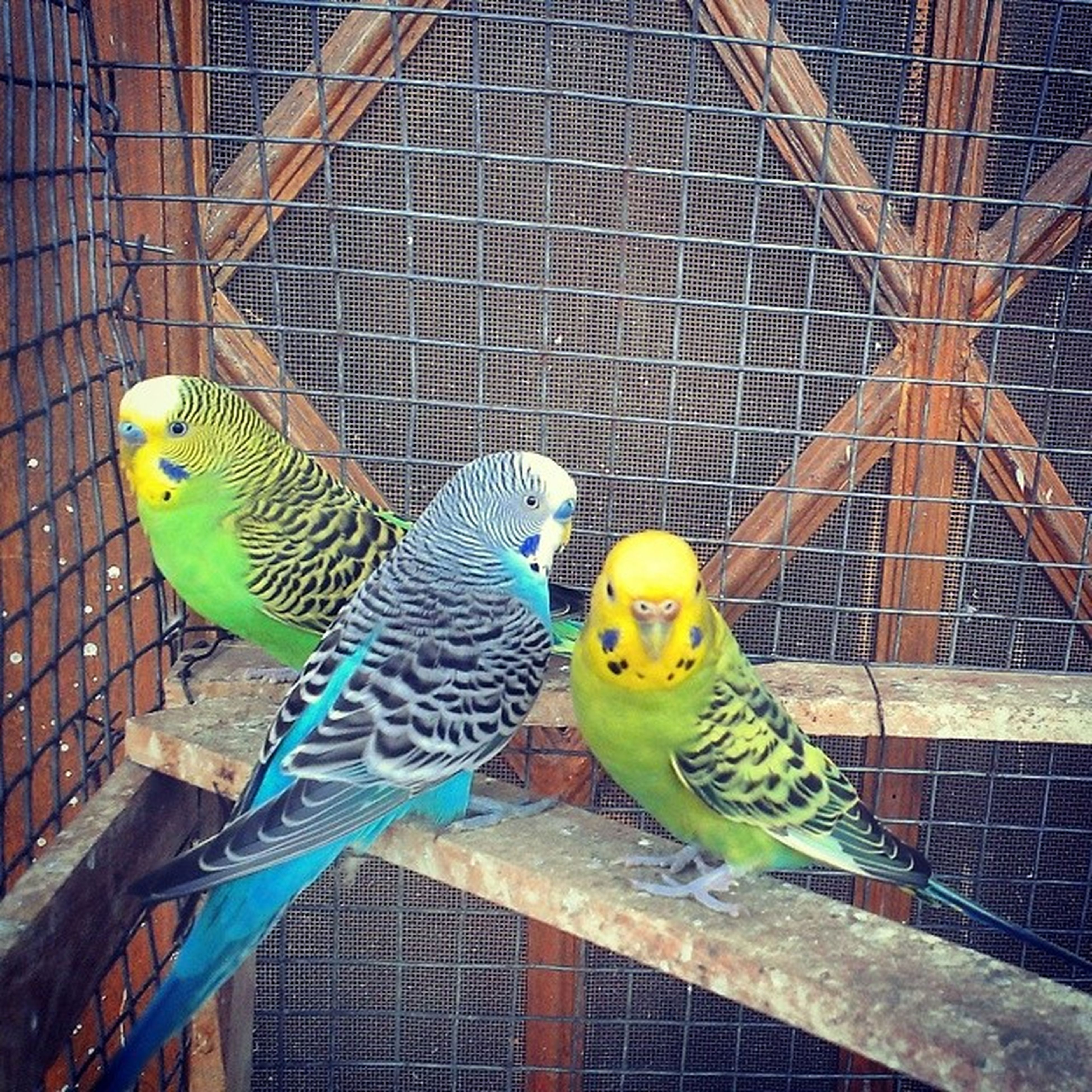 animal themes, animals in the wild, bird, wildlife, animals in captivity, parrot, one animal, perching, cage, two animals, zoo, multi colored, birdcage, full length, outdoors, no people, building exterior, day, close-up, built structure