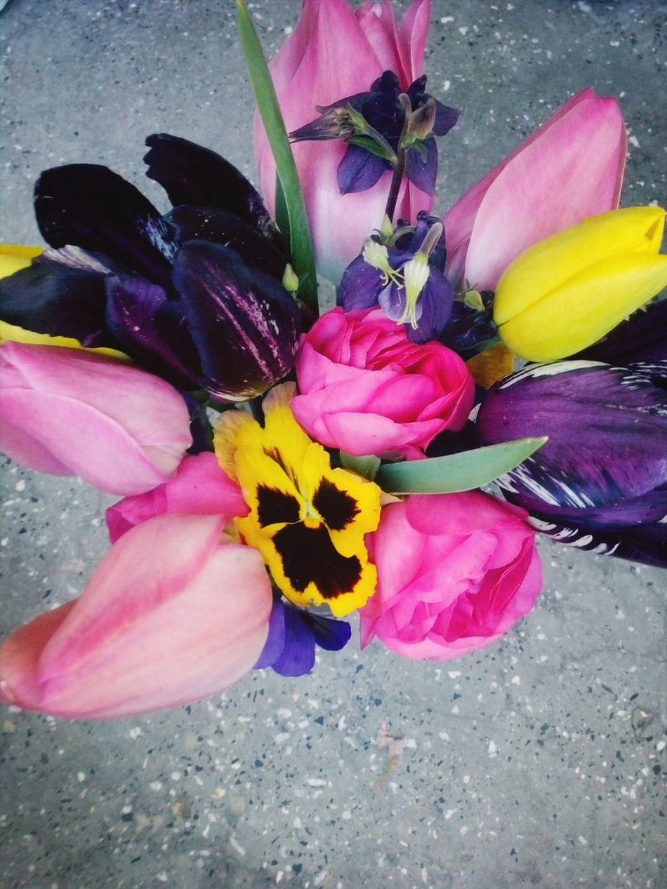 Easter Springtime Colourfull Flowers