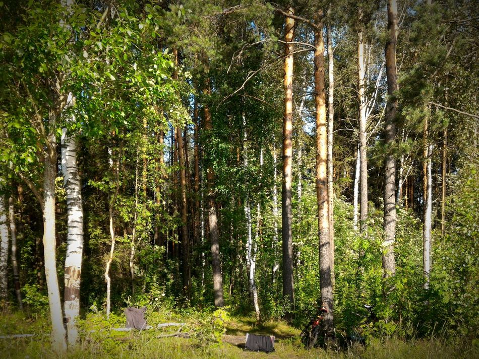 Nature Scenes Nature Lover Nature Beauty Russian Nature Forest Photography Pine Trees Tree Trunks Green Forest Exploring Surroundings Bicycle Adventures Sunlight And Trees Taking Break Showcase July