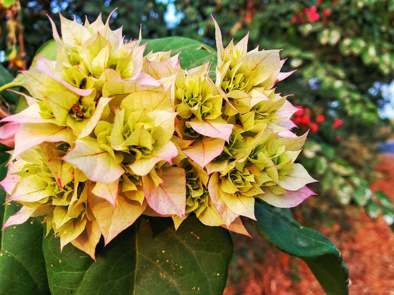 Nice group of flowers Flower Nature Paleflower
