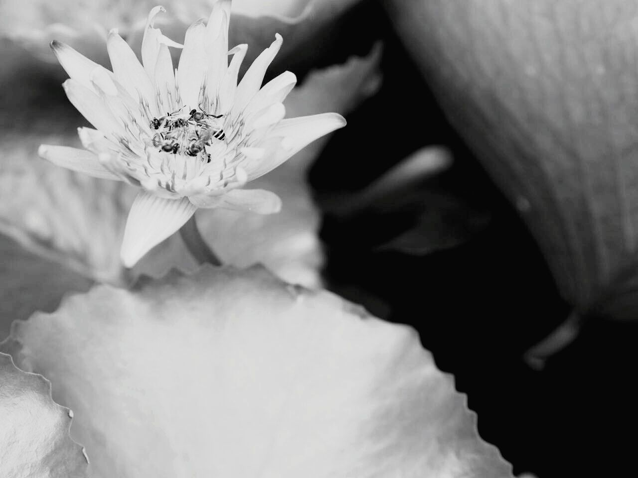 Flower Nature Beauty In Nature Fragility Freshness Plant Growth Flower Head Petal Insect Purple Outdoors Pollen Close-up Animals In The Wild One Animal Animal Themes Day Leaf No People EyeEm Thailand EyeEm Best Shots EyeEmBestPics Beauty In Nature Black And White