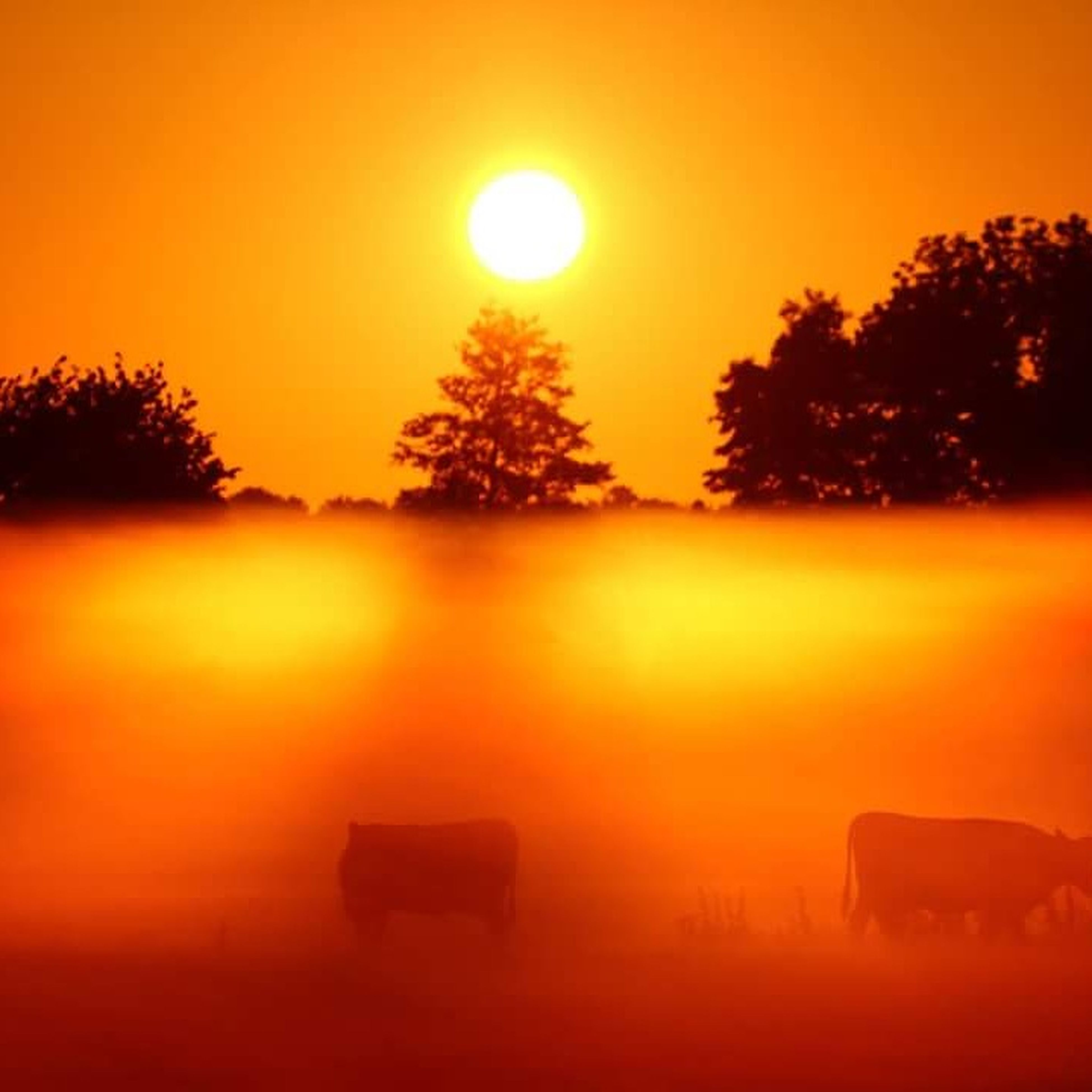 sunset, sun, orange color, tree, morning, silhouette, no people, reflection, sky, sunlight, scenics, nature, fog, outdoors, landscape, beauty in nature, dawn, day