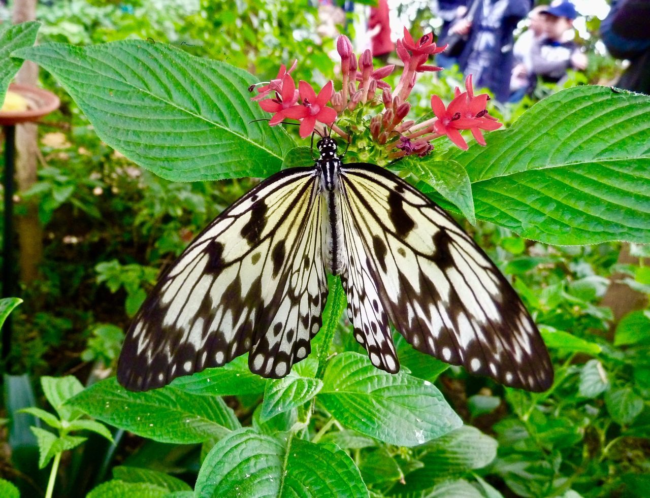 Butterfly Whipsnade Zoo Leaf Butterfly - Insect One Animal Animal Themes Insect Animals In The Wild Green Color Plant Nature Growth Close-up Animal Wildlife Beauty In Nature Day Focus On Foreground Outdoors No People Freshness Animal Markings
