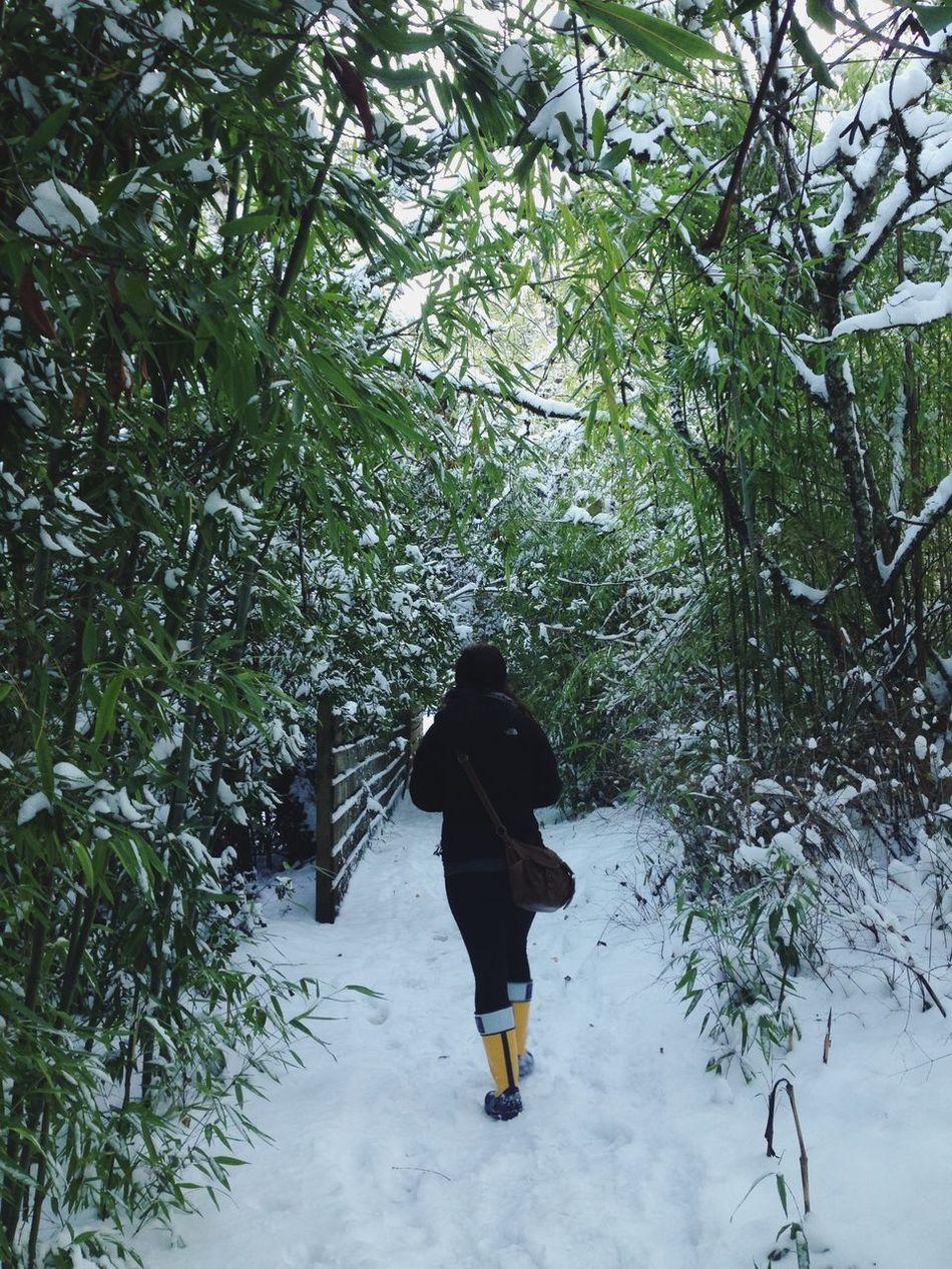 Beautiful stock photos of path, Adventure, Beginnings, Canopy, Cold