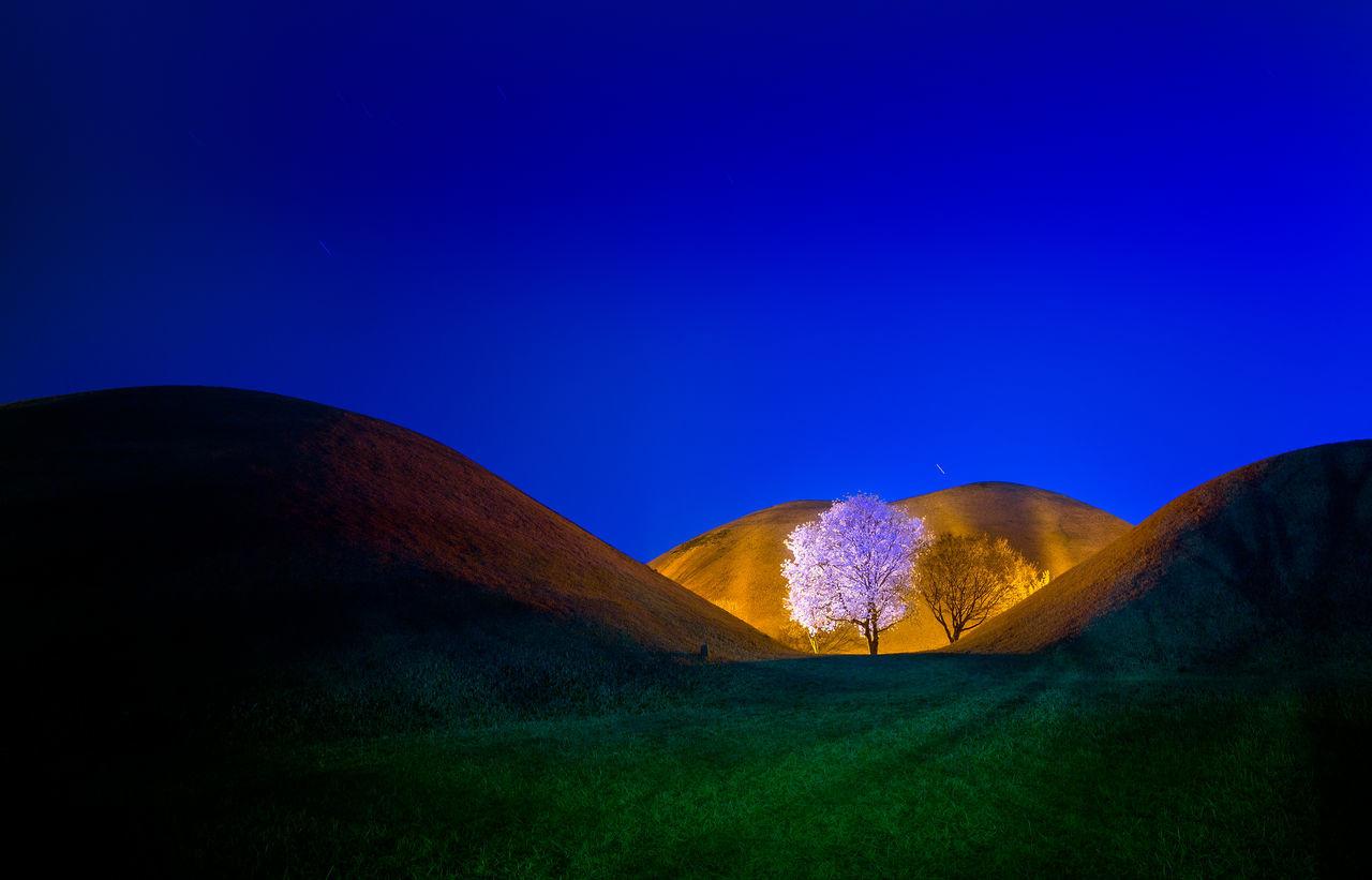Blu Sky Flowers Golden Hour Magnolia Springtime Tourism Black And White