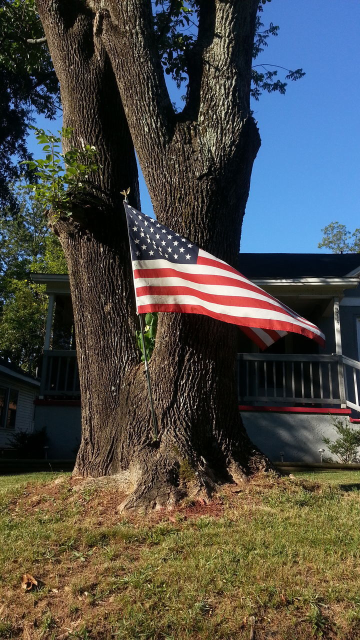 tree, flag, patriotism, tree trunk, built structure, architecture, no people, day, outdoors, low angle view, stars and stripes, building exterior, grass, nature, sky