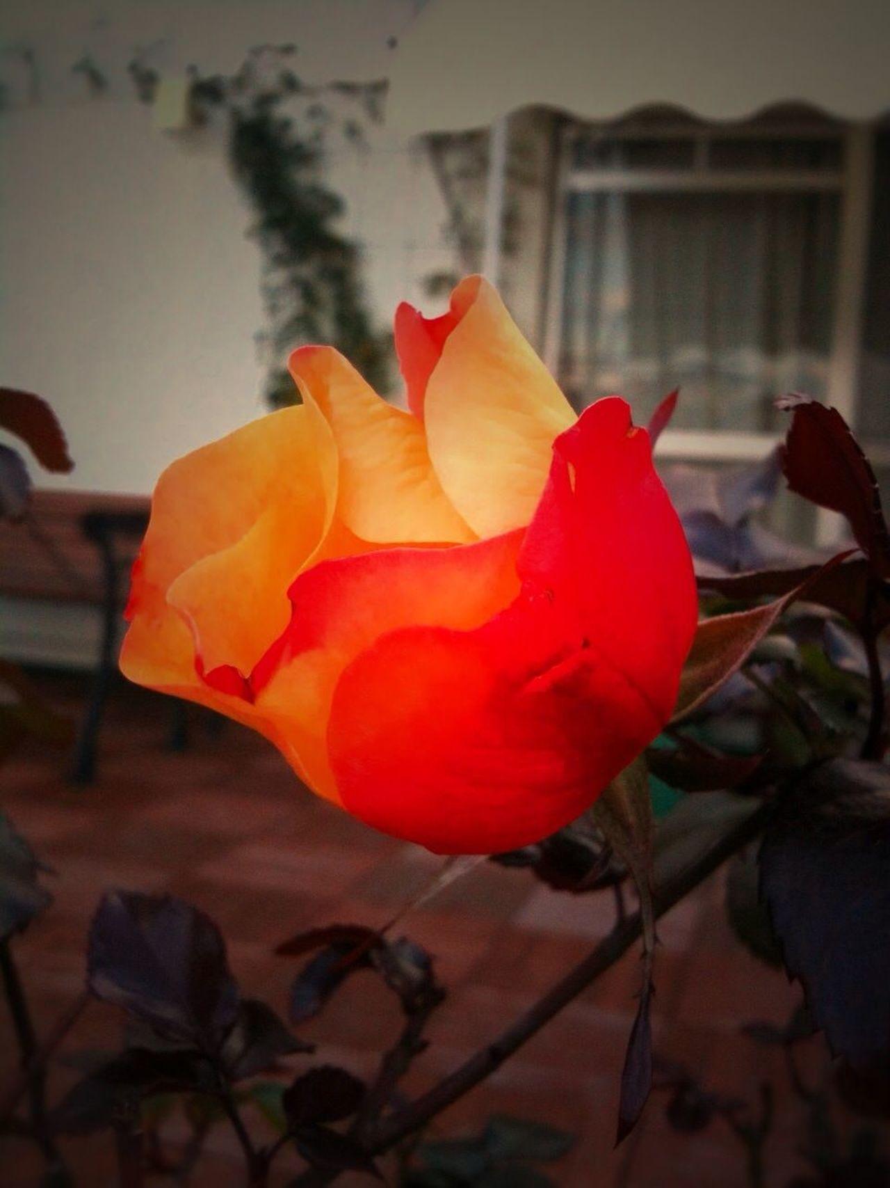 bloom at terrace Bloom