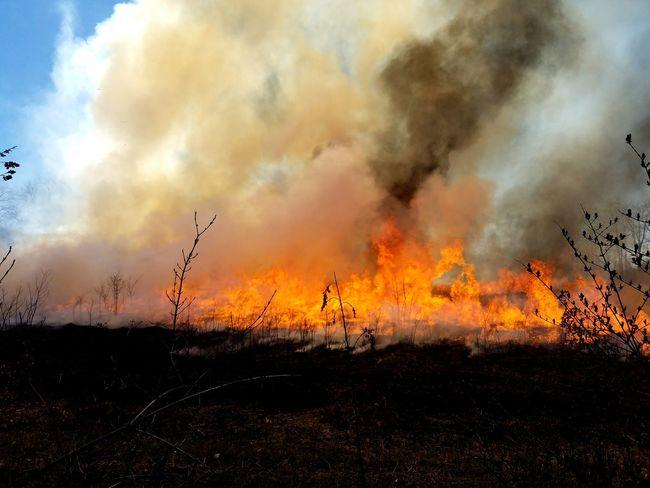 Prescribed burn. Prescribed Fire Prescribedburn Seasonal Grasses Flames Fire Heat Burn Burning Grass Grasses Grass Fire Field Landscape_Collection